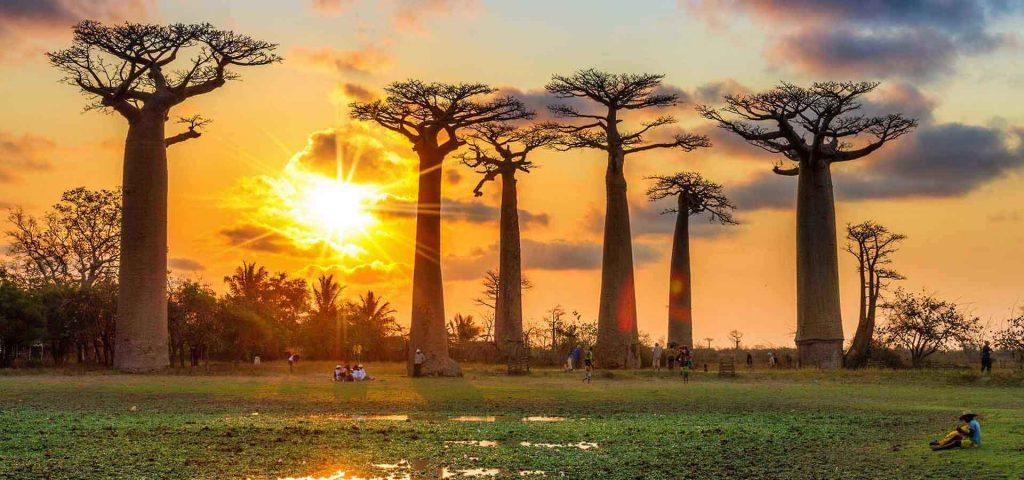 Madagascar, Avenue of the Baobabs