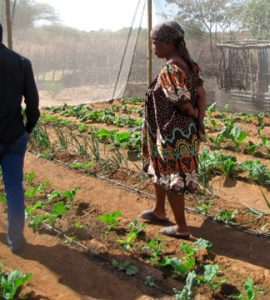 Botswana Land Reform and Rural Transformation Overview