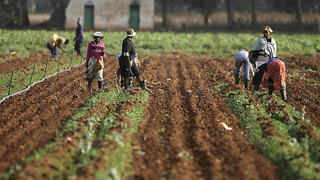 Kenya Land Reform and Rural Transformation Overview | PESA