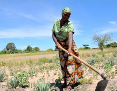 Tanzania Land Reform and Rural Transformation Overview
